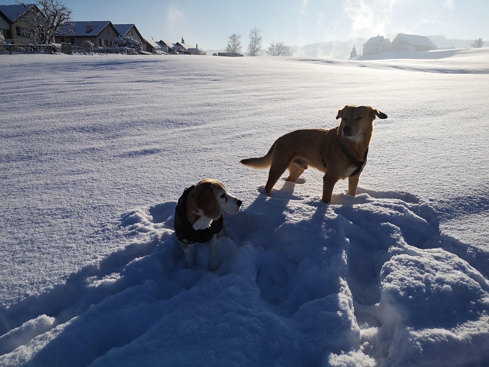 Lady-Socrates-Schnee